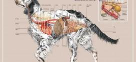 اناتومی سگ بخش اسکلت و ماهیچه