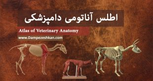 اطلس آناتومی دامپزشکی