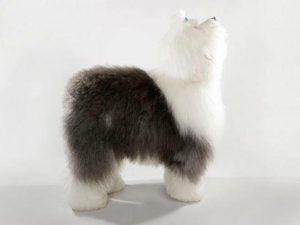 نژاد الدانگلیش شیپداگ Old English Sheepdog