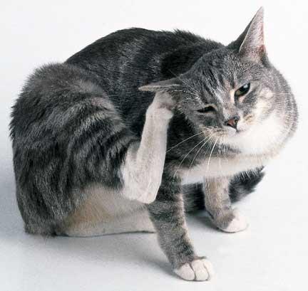 بیماری انگلی خارجی پوست در حیوانات