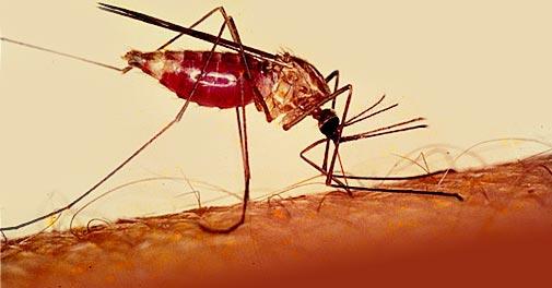 آشنایی با بیماری مالاریا