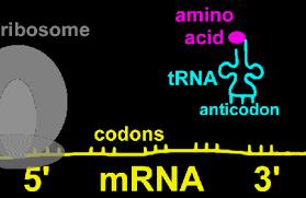 آشنایی با ساختارهای پروتئین