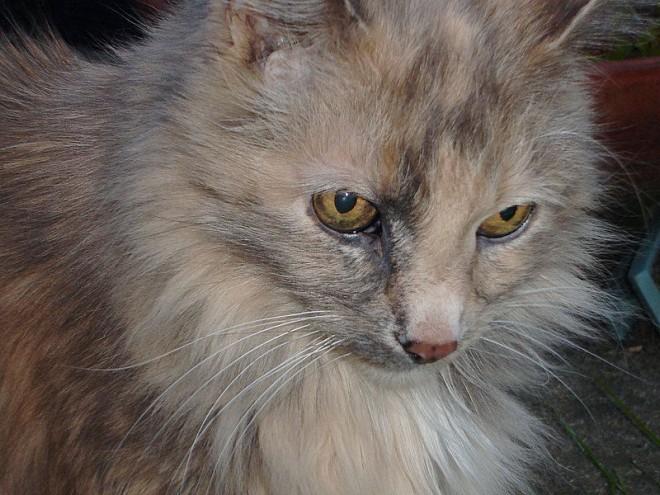 مشکلات رایج گربه های مسن