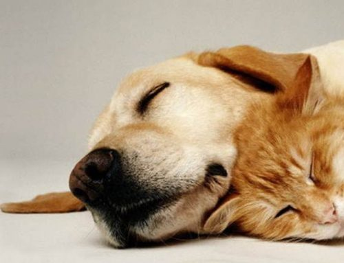 Common Foods Toxic to Dogs and Cats