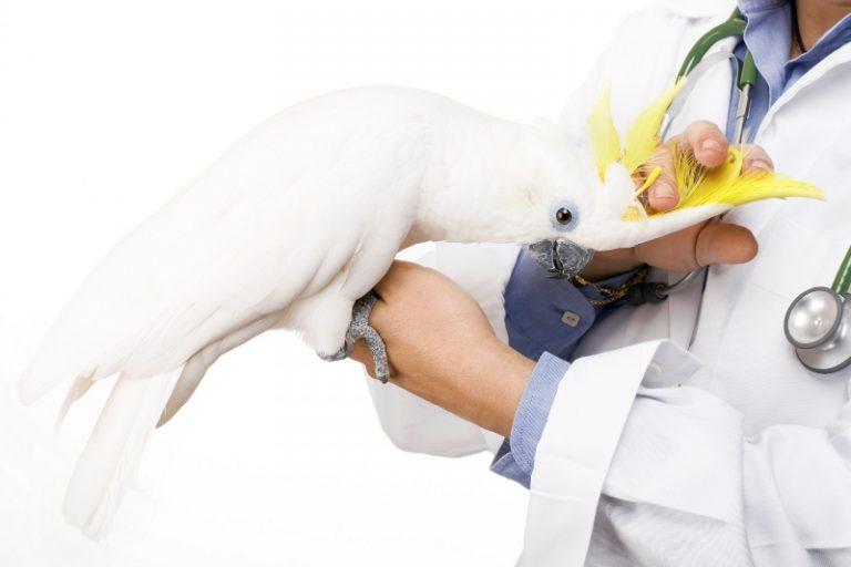 نكات مهم در انتقال پرنده بیمار به دامپزشک