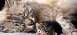 Mommy cat and Baby Cat