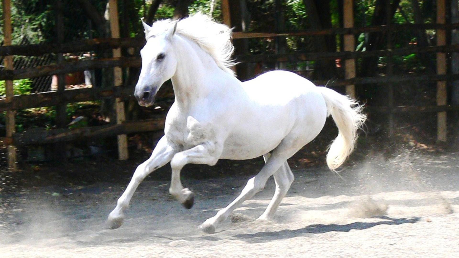 مشمشه در اسب - دامپزشکان