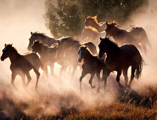 آنسفاليت ويروسي اسب