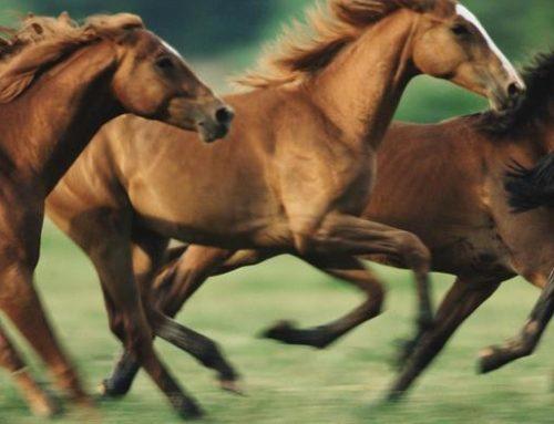بيماري هاي قارچي و انگلي در اسب