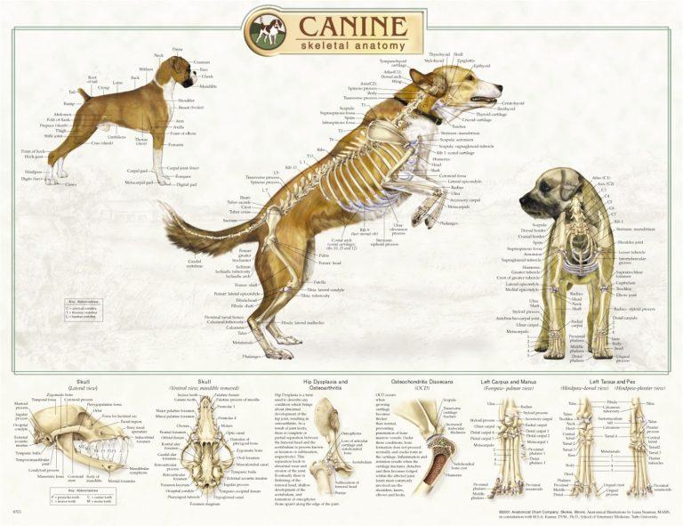 توضیحات کامل در رابطه با آناتومی