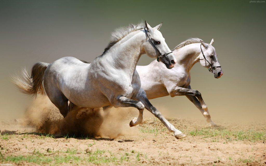 راه های تشخيص تكميلي در اسب