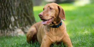 انواع کنترل اندوکرینی در سگ