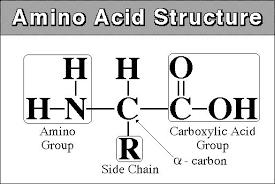 طبقه بندی اسیدهای آمینه استاندارد