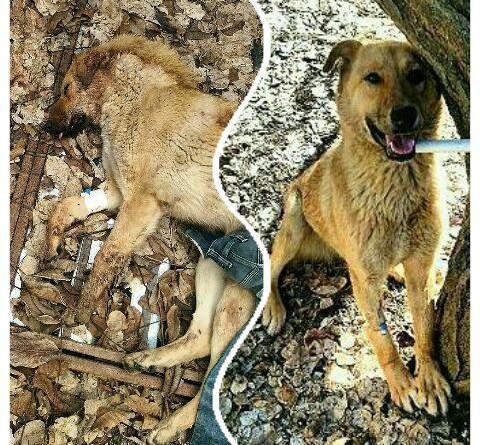 آموزش کمک های اولیه به سگ تصادفی