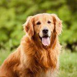انواع بیماری های گوارشی در سگ
