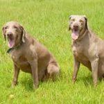 آشنایی با انواع بیماری دستگاه گوارش سگ