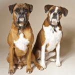 انواع بیماری های تناسلی سگ ماده