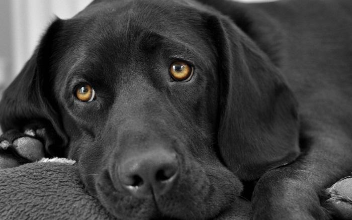 انواع بیماری های چشم وگوش سگ