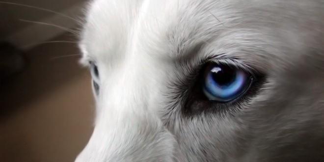 خون جلوی محفظه چشم در سگ