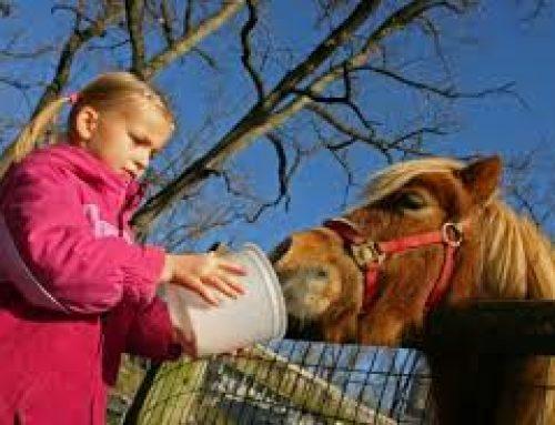 نکاتی مهم برای تغذیه اسب ها