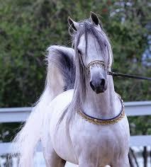 آشنایی با مهمترین بیماری های اسب