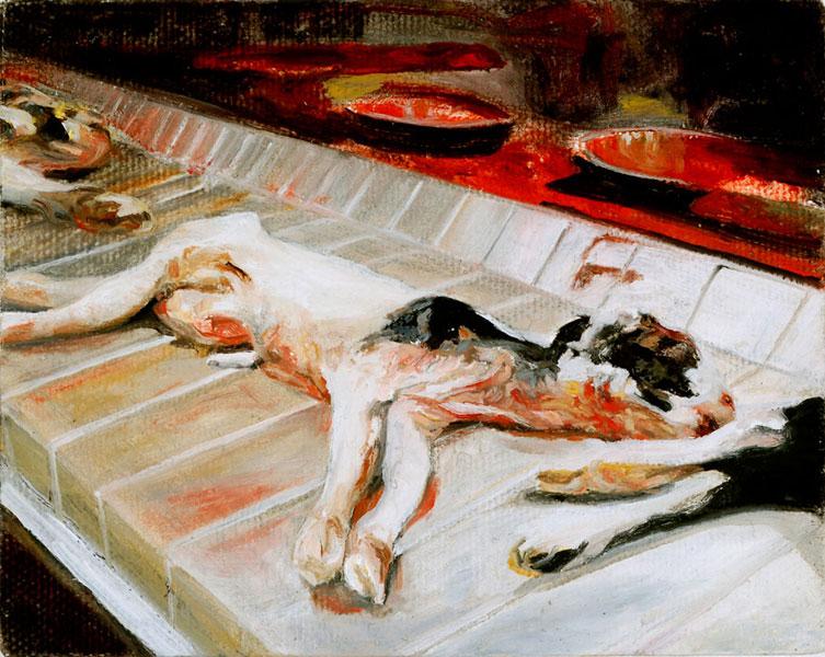 مرگ جنين و آبورت در حیوانات