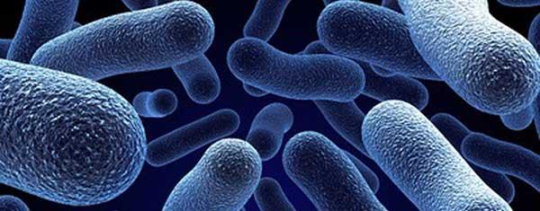 مزایا و معایب کاربردهای باکتری
