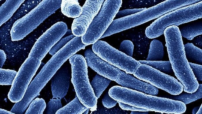 شکل بندی و رده بندی باکتری ها