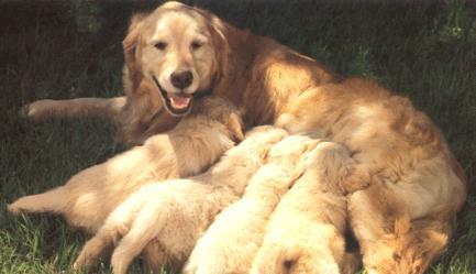 آشنایی با پریود و زایمان در سگ