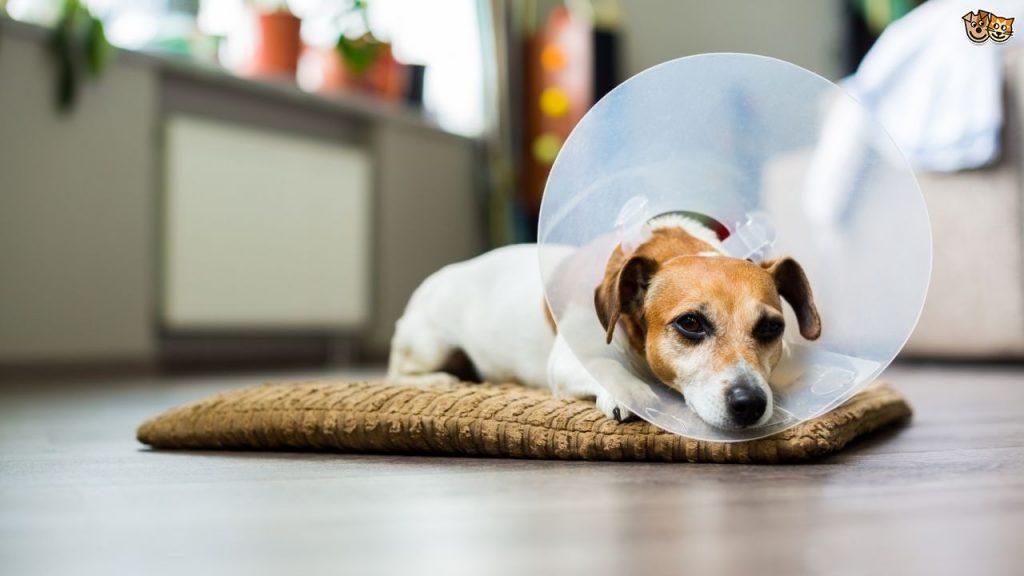 آشنایی با مراقبتهای سلامتی سگ