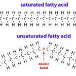 اسید چرب و چه نقشی در موجودات زنده دارد