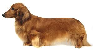 انواع بیماری های دستگاه عصبی سگ