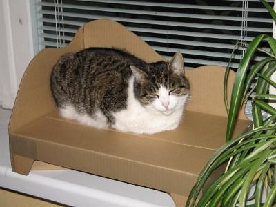 تاریخچه گربه های dsh