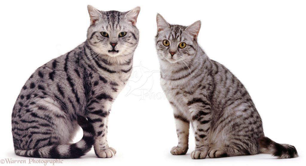آشنایی با تفاوت رفتاری گربه نر و ماده
