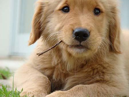 بیماری های درد معده در سگها