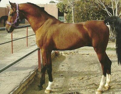 معرفی نژاد اسب دره شوري
