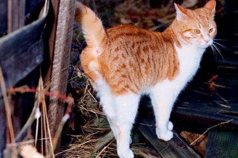 علت ادرار کردن گربه در اطراف محل زندگی