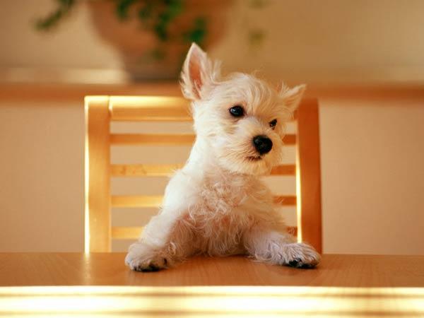 آشنایی با درد در حیوانات خانگی
