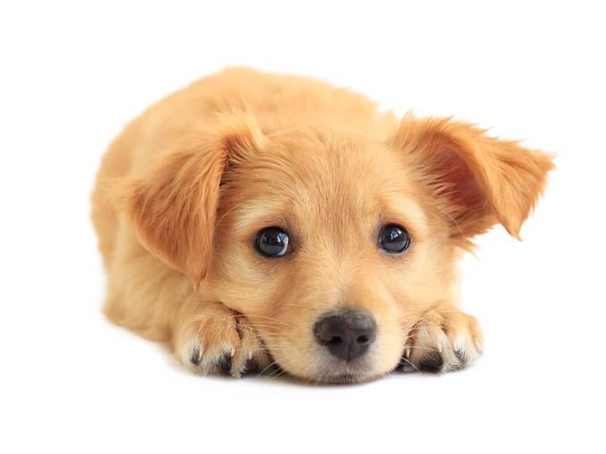 تولد سگ و مراقبت ازتوله های تازه متولد