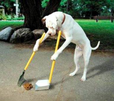 دلایل مدفوع خواری در سگ