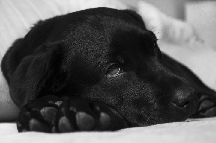دلایل سنگ خواری در سگ ها