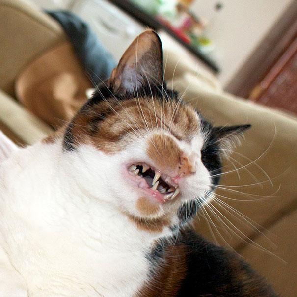 درمان و راه پیشگیری از عطسه گربه ها