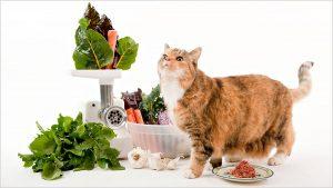 آموزش تهیه غذا لذیذ برای بچه گربه