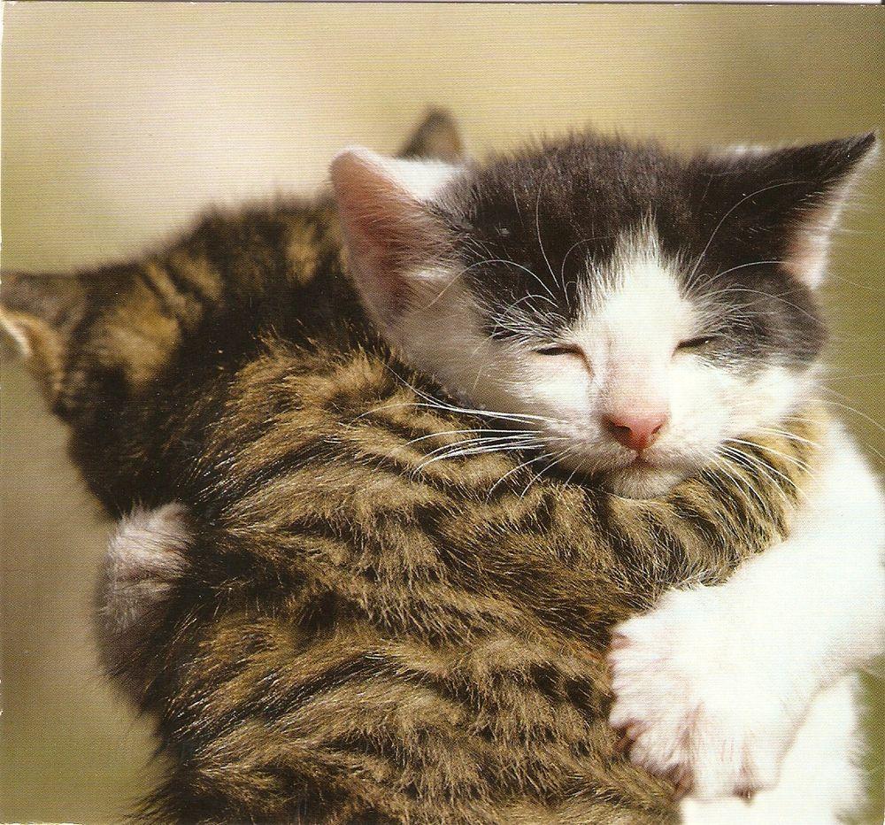 آشنایی با عواطف در گربه ها