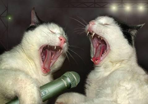 مزایا آواز خواندن با گربه