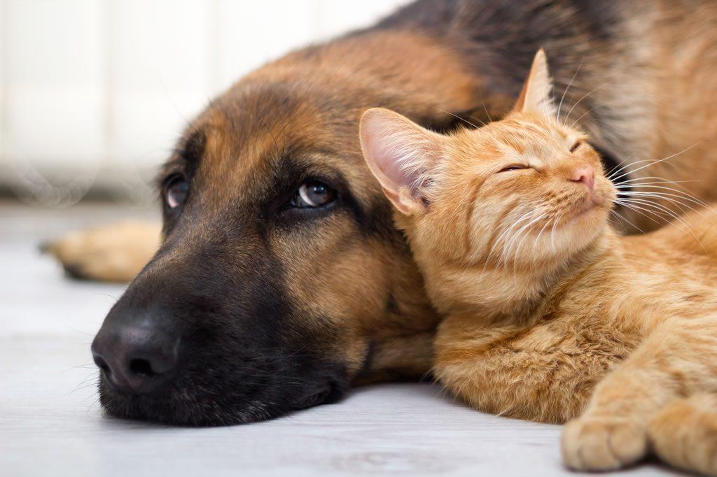 چطور سگ و گربه را با هم نگه داریم؟