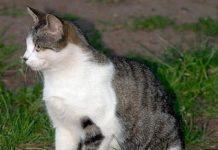 دلایل اسپری کردن گربه های نر