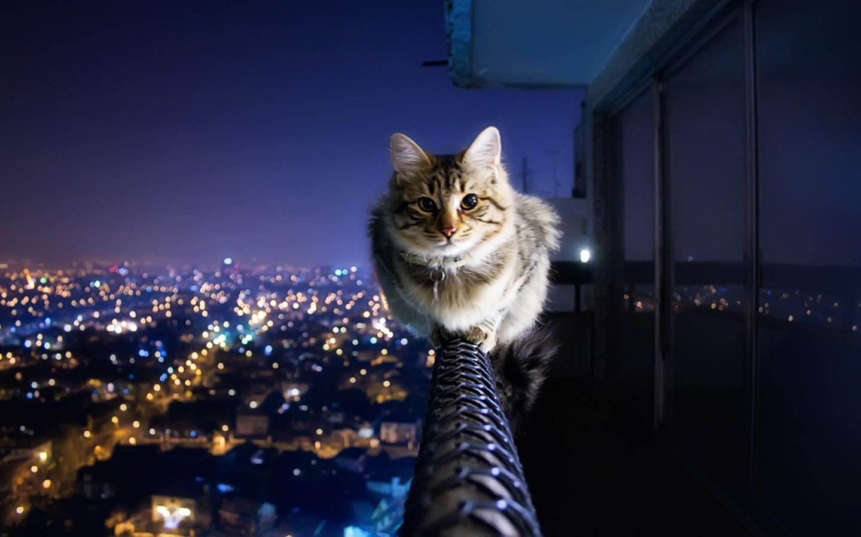 مزایا و معایب شب گردی گربه
