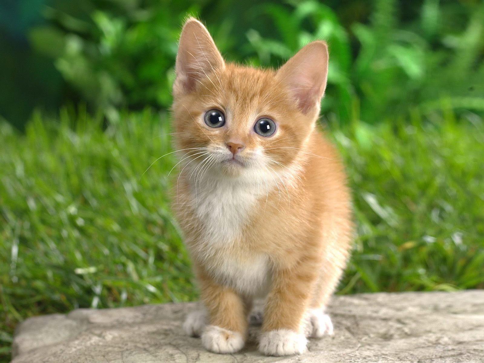 راه های فهمیدن چیزی های که گربه ميخواهد
