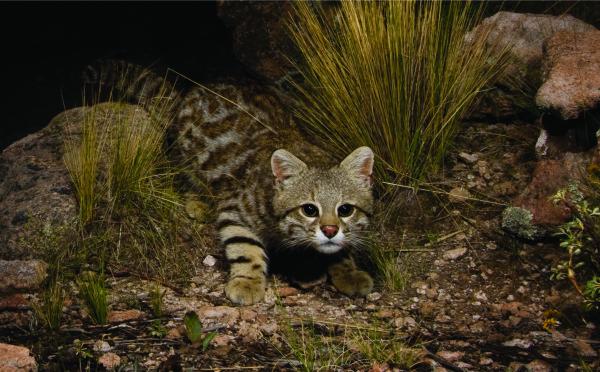 آشنایی با انواع بازی کردن گربه ها